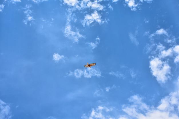Falco che vola alto nel cielo blu