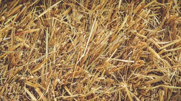 Primo piano delle balle di fieno. agricoltura e allevamento. sfondo.