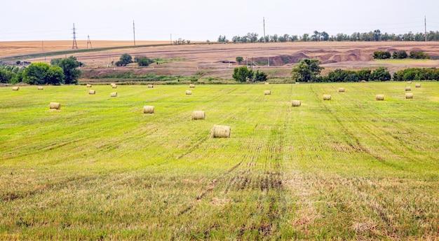 Fienagione rotoli di fieno in campo dopo la raccolta
