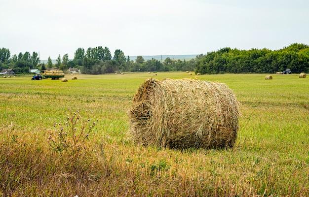 Fienagione rotoli di fieno in campo tempo di raccolta