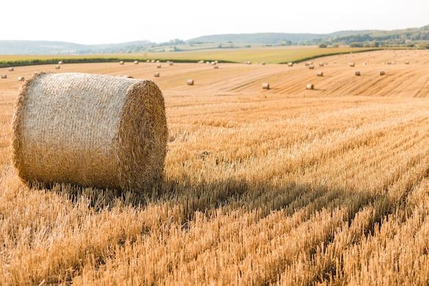 Mucchi di fieno in campo autunnale. giallo grano dorato raccolto in estate. paesaggio naturale di campagna. balla di fieno