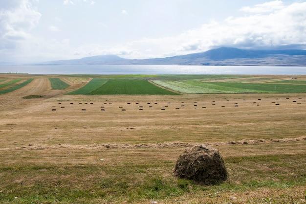Mucchi di fieno e rotoli, agricoltura in georgia, fieno secco e paesaggio di montagna con il lago faravani