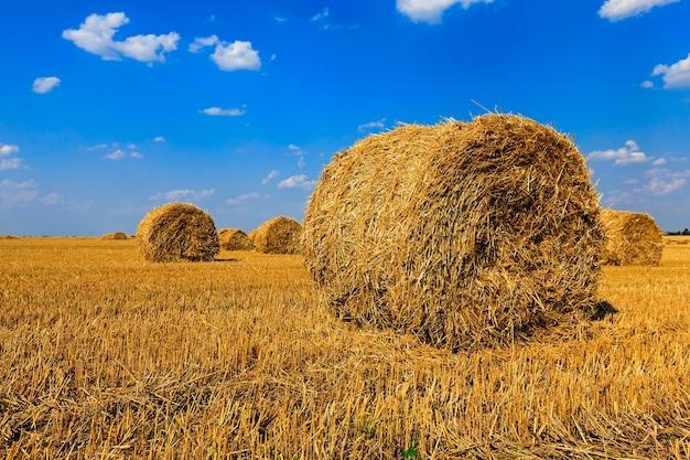 Paglia dei mucchi di fieno - paglia dei mucchi di fieno che si trova nel campo agricolo dopo il raccolto. estate