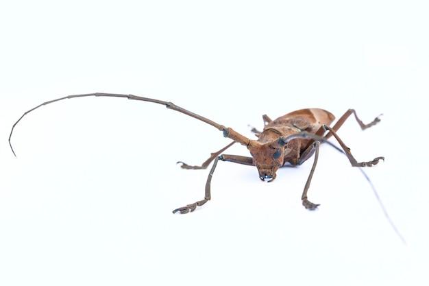 Lui insetti