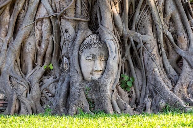 Testa della statua del buddha nelle radici degli alberi a wat mahathat nella provincia di ayutthaya, thailandia