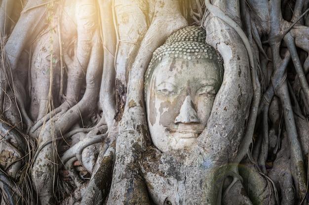 Testa della statua di buddha nelle radici dell'albero a wat mahathat, ayutthaya, tailandia.
