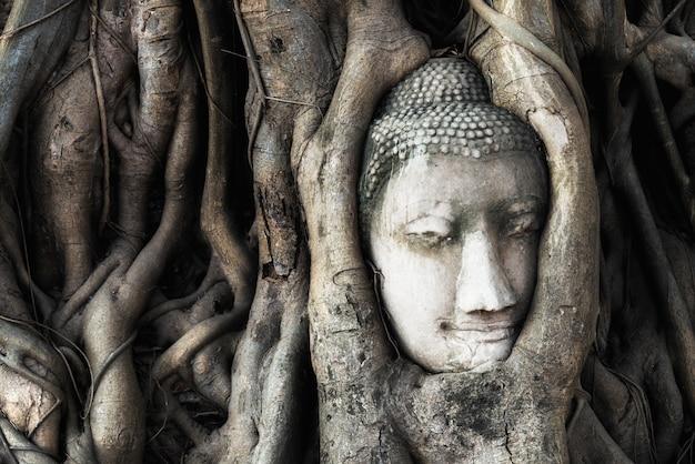 Testa della statua di buddha nelle radici dell'albero al tempio di wat mahathat nel parco storico di ayutthaya, tailandia.