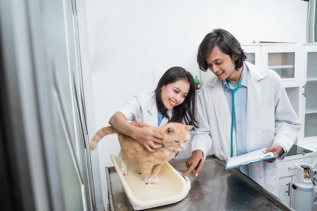 Un gatto sano viene tenuto e pesato da una dottoressa e un dottore maschio che esaminano e registrano il peso totale del gatto presso la clinica veterinaria