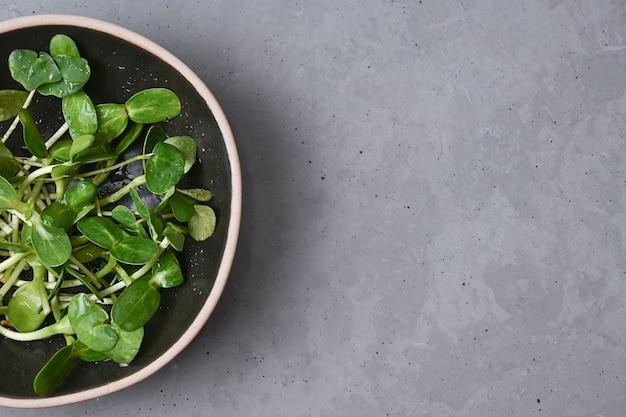 Concetto di cibo sano, microgreens di girasole in una ciotola su uno sfondo grigio, verdure germogliate vegetariane, spazio di copia.
