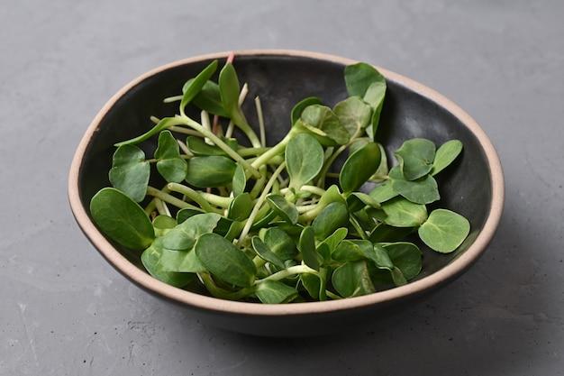 Concetto di nutrizione sana, microgreens di girasole germogliati in una ciotola su uno sfondo grigio, cibo vegetariano, primo piano.