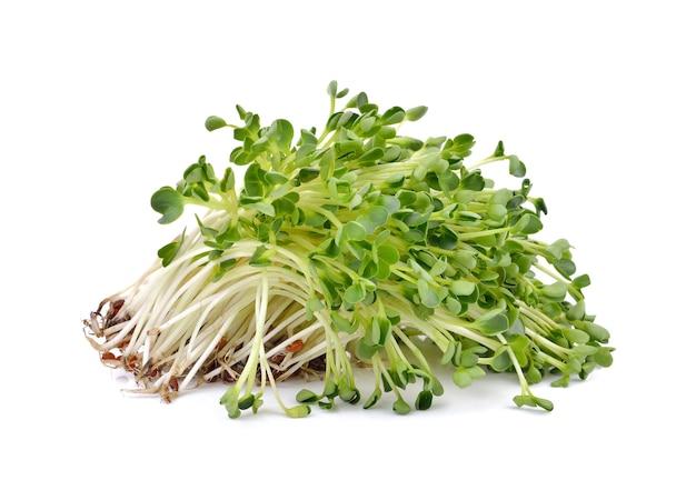 Mucchio di germogli di erba medica su bianco