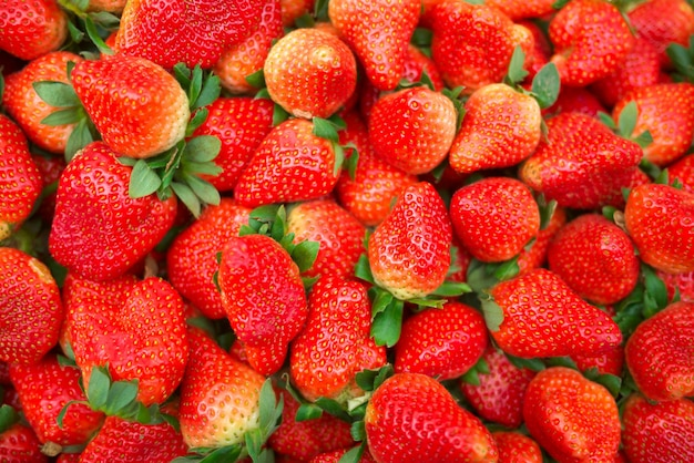 Mucchio di fragole fresche