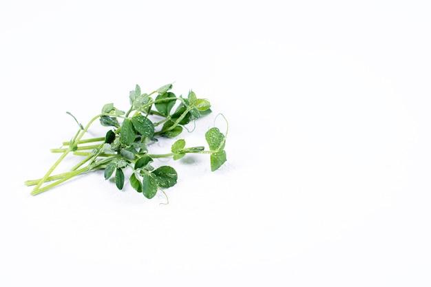 Mucchio di germogli di piselli, micro verdi su sfondo bianco