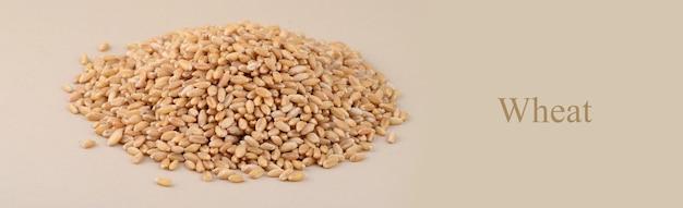 Mucchio di chicchi di grano sullo sfondo. avvicinamento