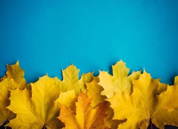 Cumulo di giallo foglie di acero su sfondo blu, vista dall'alto, da vicino