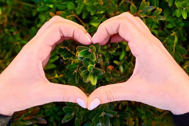 Cuore dalle mani sullo sfondo della pianta verde sul prato fresco