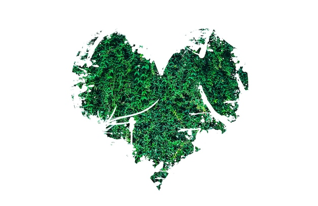 Cuore da foglie isolati su sfondo bianco. pianeta d'amore. concetto di natura ecologica.