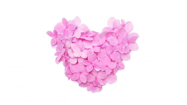 Una forma del cuore del fiore rosa dell'ortensia su un fondo bianco.