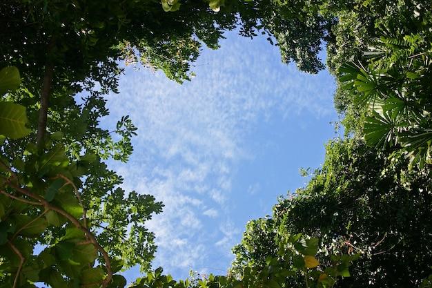 Cielo a forma di cuore in una foresta tropicale