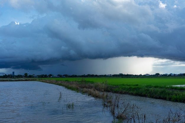 Heavy rain versando vicino al campo di riso in campagna la sera thailandia