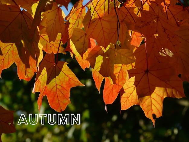 Ciao autunno, benvenuto autunno