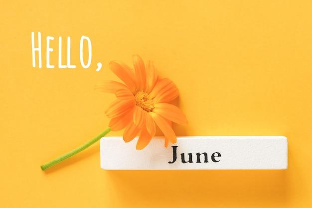 Ciao testo di giugno, biglietto di auguri. un fiore di calendula arancione e un mese estivo del calendario giugno su sfondo giallo. vista dall'alto copia spazio piatto stile minimal.