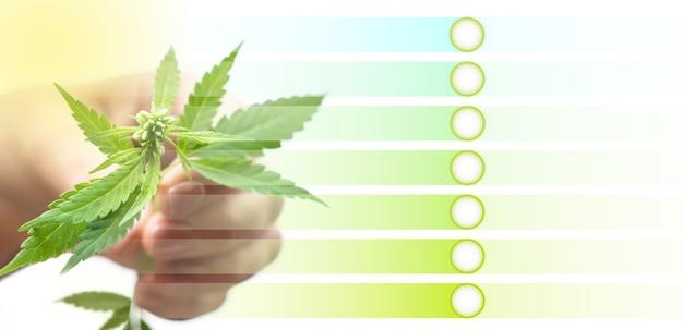 Concetto di prodotti di canapa. mano femminile che tiene una pianta di cannabis. modello con strisce e cerchi per il testo