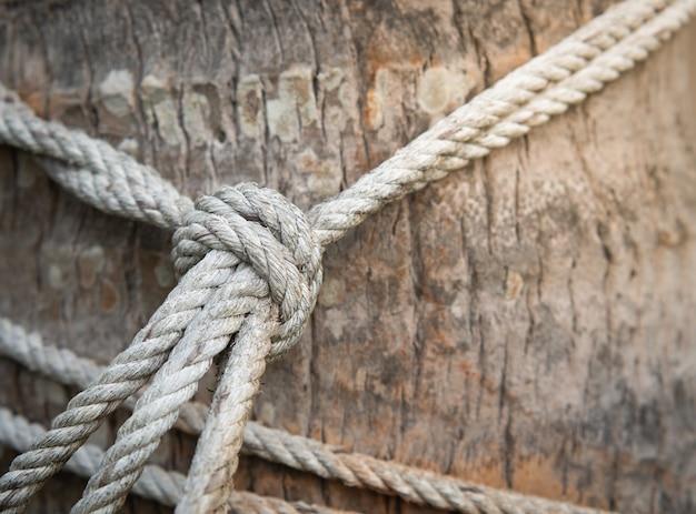 La corda di canapa è legata con un nodo a un grosso tronco d'albero