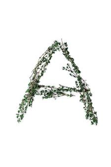 Alfabeto di carattere a base di erbe un fatto di vero timo. concetto naturale isolato su uno sfondo bianco