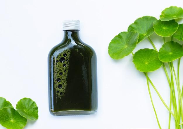 Bottiglia di succo di erbe, foglie verdi fresche di centella asiatica o pianta di pennywort d'acqua o gotu kola. concetto di bevande sane