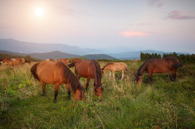 Un branco di cavalli in montagna