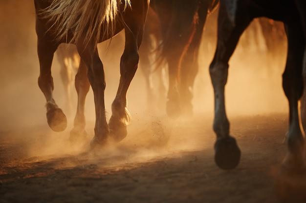 Una mandria di cavalli che corrono