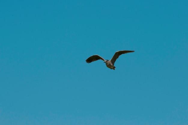Un airone che vola con un cielo blu chiaro