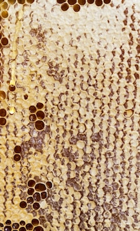 Favi a nido d'ape di forma esagonale chiusi dalle api per conservare il cibo per l'inverno, primo piano