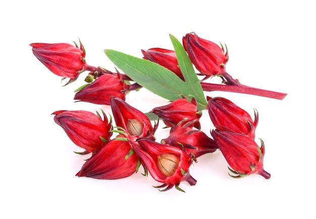 Hibiscus sabdariffa o frutti di roselle isolati su bianco