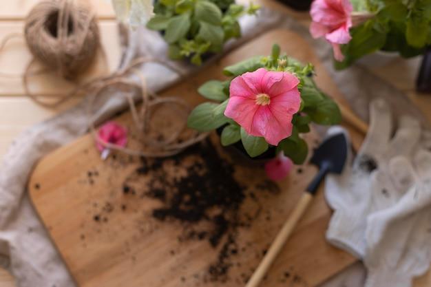 Composizione ad alto angolo con fiori rosa