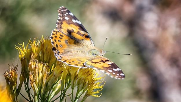 Colpo del primo piano dell'angolo alto di una bella farfalla su una pianta