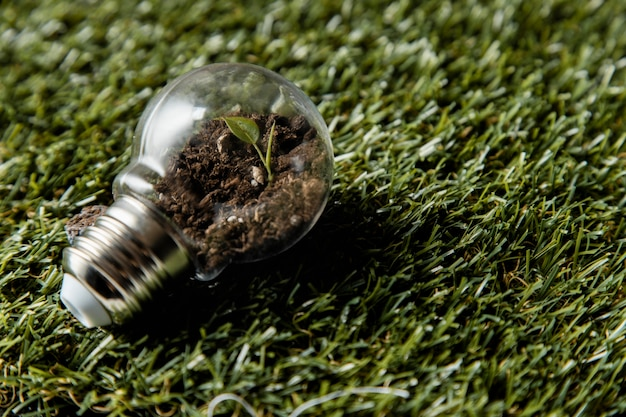 Alto angolo di lampadina con pianta sull'erba
