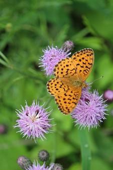 Colpo ad alto angolo di una farfalla arancione su un cardo