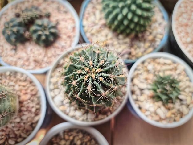 Elevato angolo di visione della piccola pianta succulenta in vaso con pietre di ghiaia marrone rosso