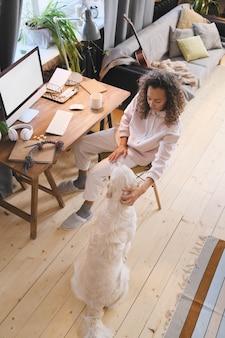 Vista di alto angolo della giovane donna che gioca con il suo animale domestico mentre lavora in linea a casa
