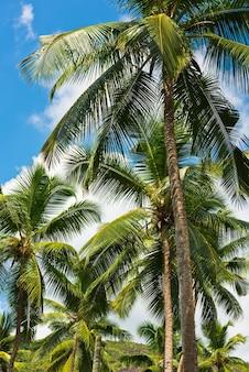 Alte palme su una spiaggia tropicale all'isola di mahe seychelles
