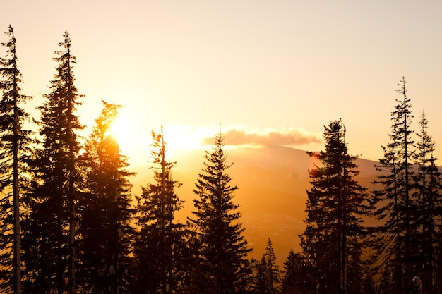 Alte corone di alberi di pino sulle colline e sullo sfondo della valle con un luminoso tramonto dorato sopra il chiaro giorno di estate
