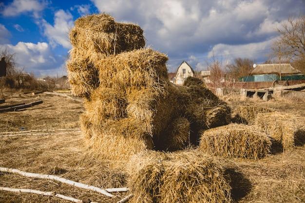 Alta pila di fieno essiccato in fattoria