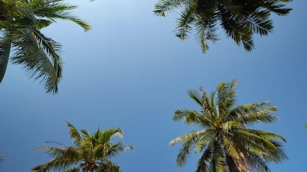 Alte palme tropicali si elevano al di sopra della spiaggia sotto il sole cocente contro il cielo azzurro sconfinato a bassa angolazione