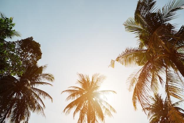 Alte palme tropicali si elevano al di sopra della spiaggia sotto il sole cocente contro la luce solare sconfinata del cielo blu