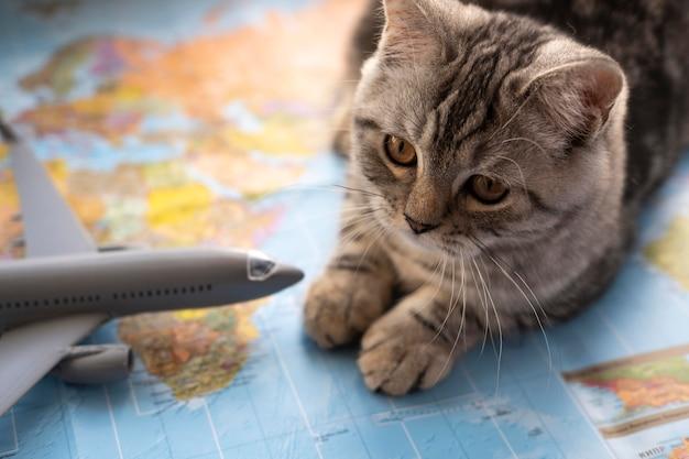 Gatto di alta vista seduto su una mappa