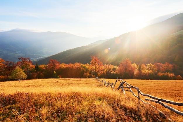 La vegetazione degli altipiani è modesta in estate e fiorisce in colori insolitamente belli in autunno