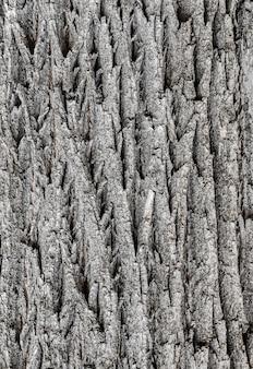 Struttura della corteccia di albero altamente dettagliata