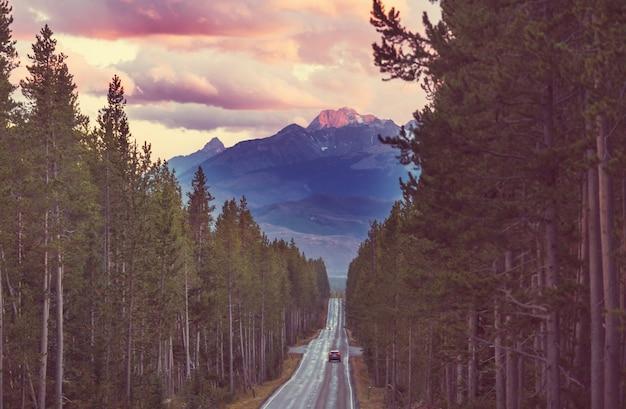 Autostrada nella foresta, usa, wyoming.